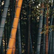 Kyoto, Japan | world | travel | japan