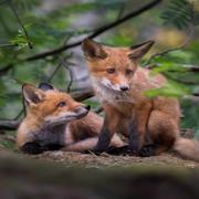 Forest animals 🌳 | world | travel | forest
