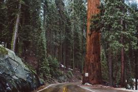 California | world | travel | california