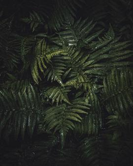🌿 | nature | beautiful nature | forest