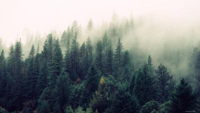 Значение леса в природе и жизни человека. Последствия потери