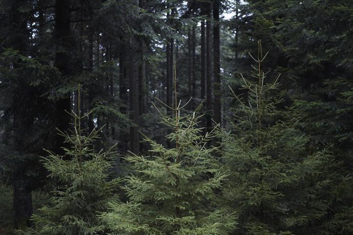 Леса Вогезы, Франция | мир | путешествия | леса вогезы