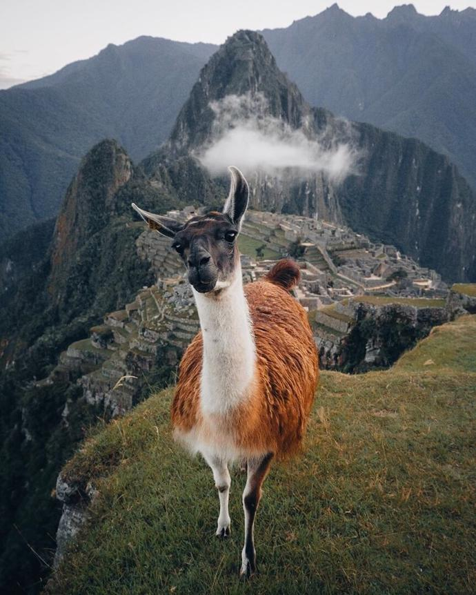 Machu Picchu | world | travel | machu picchu