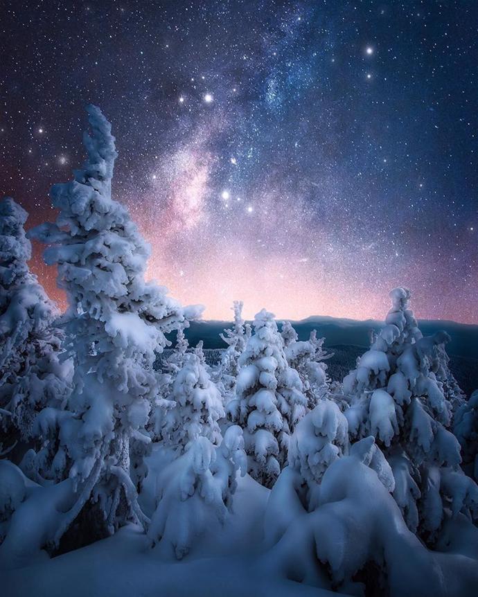 Winter forest, Quebec | quebec | forest | winter