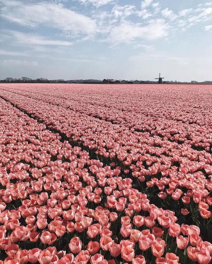 Netherlands 🌷 | world | travel | netherlands