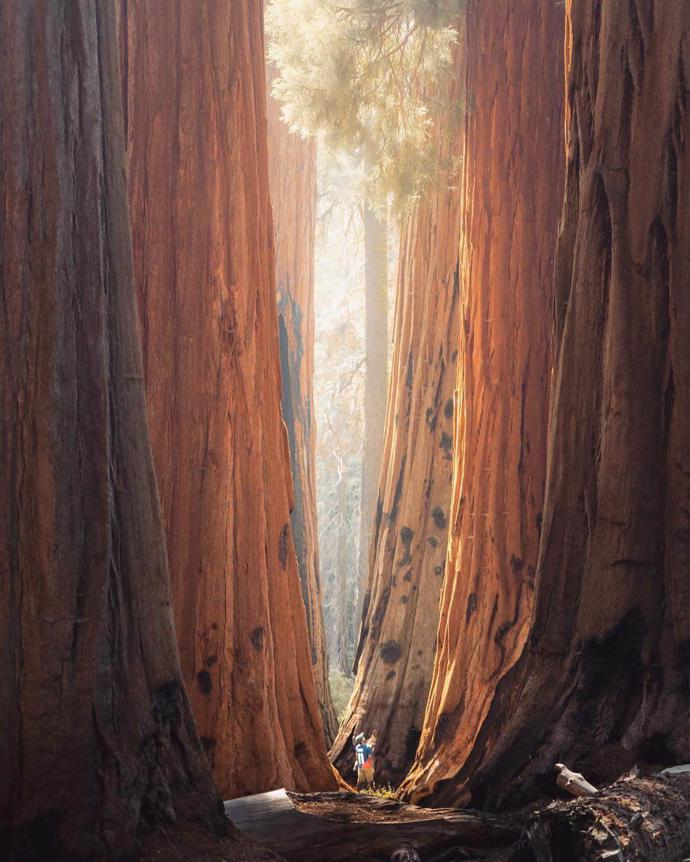 Sequoia National Park | world | travel | california
