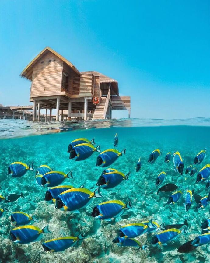 Maldives | world | travel | maldives