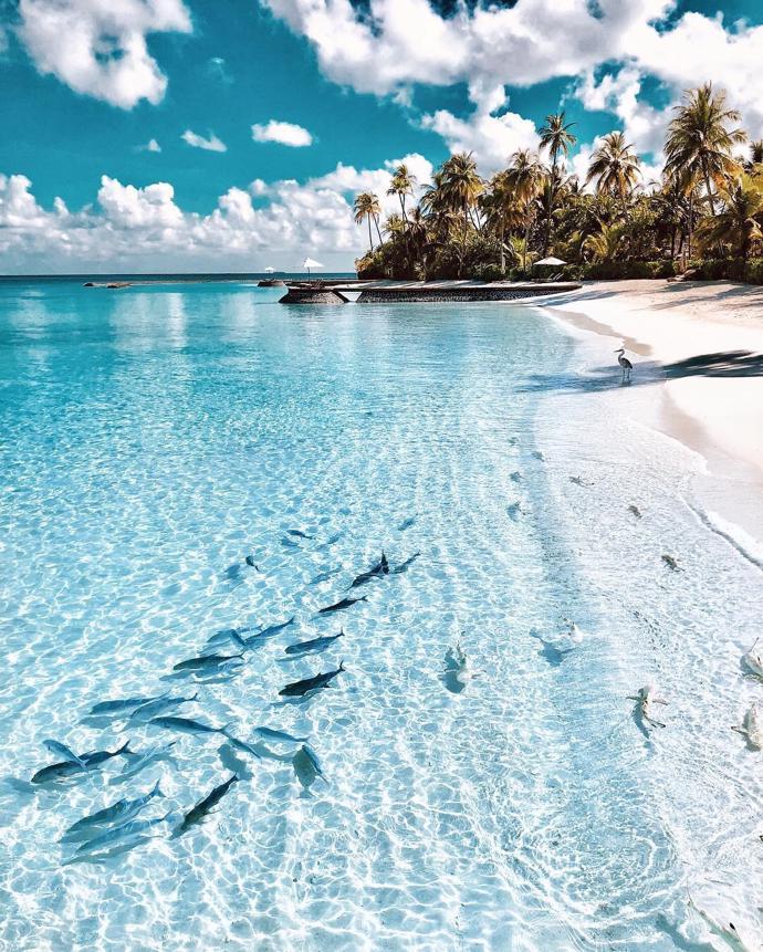 Maldives   travel   maldives   nature