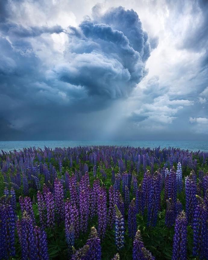 New Zealand   world   travel   earth
