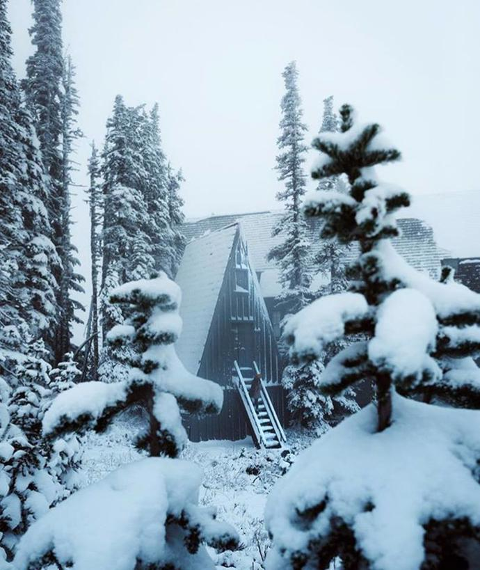 Winter is so beautiful | winter | forest | snow