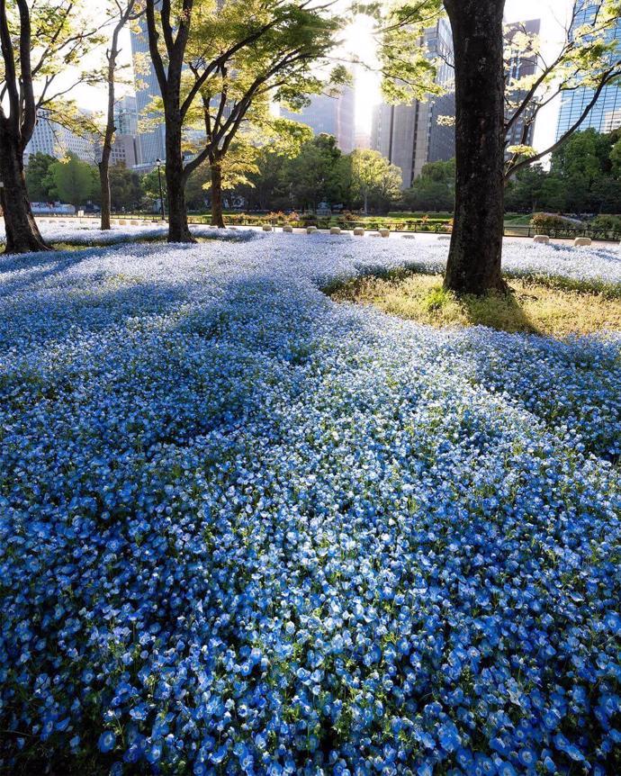 Tokyo, Japan | world | travel | tokyo