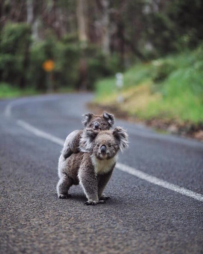 Australia   world   travel   australia