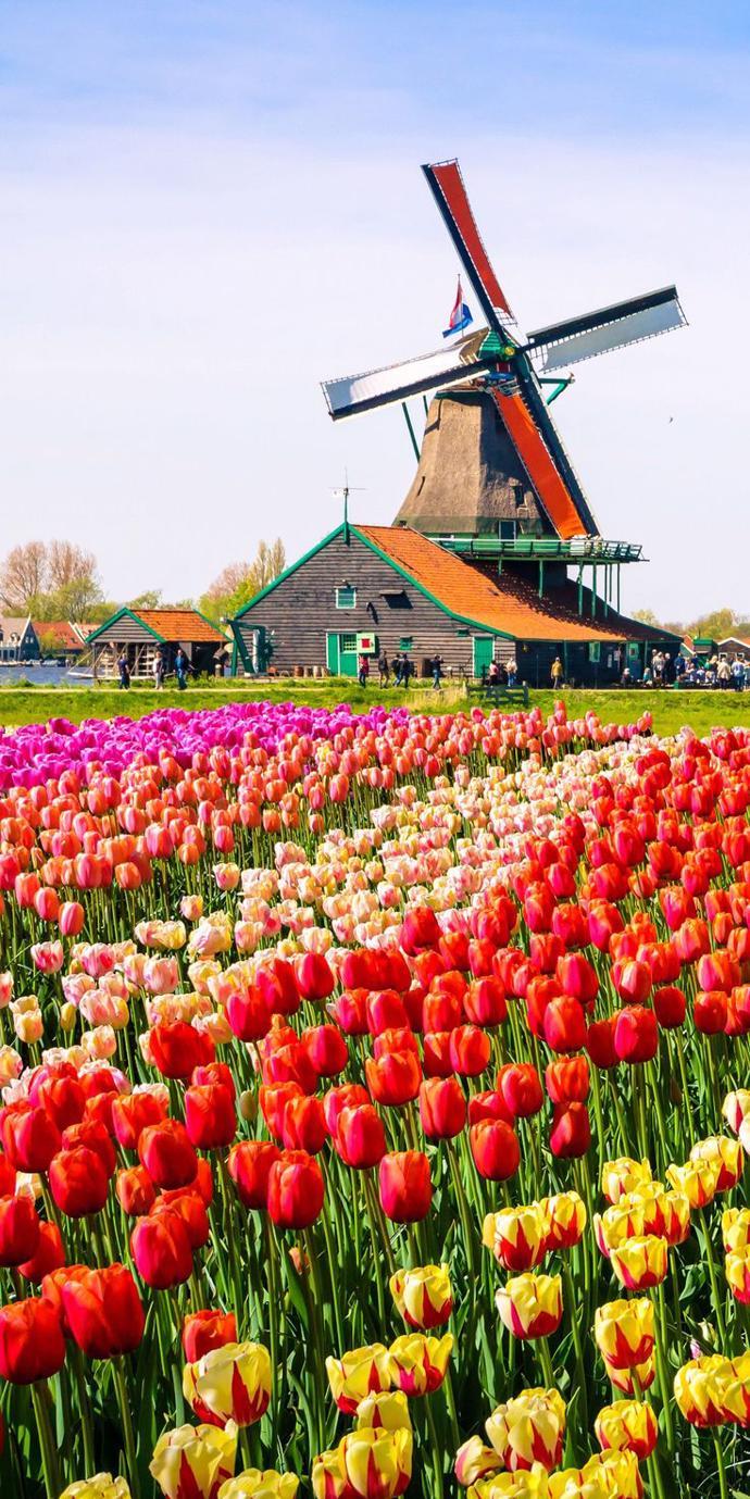 Amsterdam | world | travel | nature