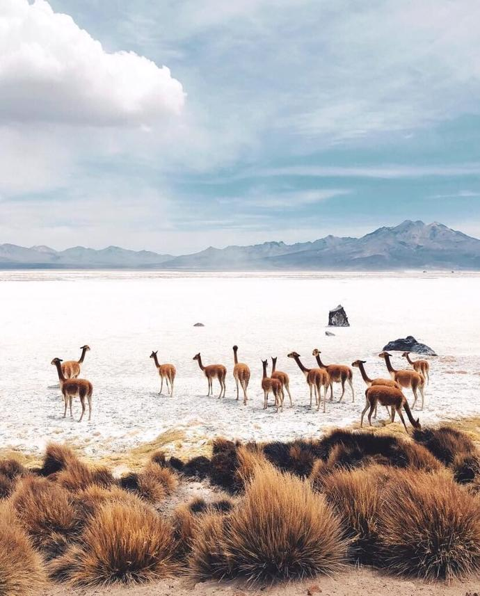 Chile   world   travel   chile