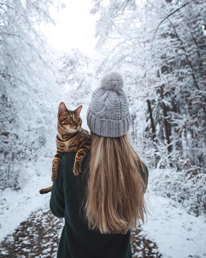 | cat | travel | snow