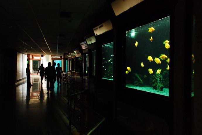Bagh-e Bahu Aquarium | photos | bagh-e bahu | aquarium