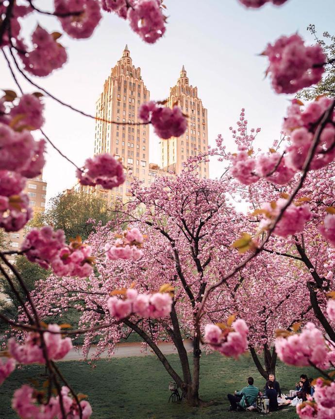 Central Park, New York City | world | travel | central park