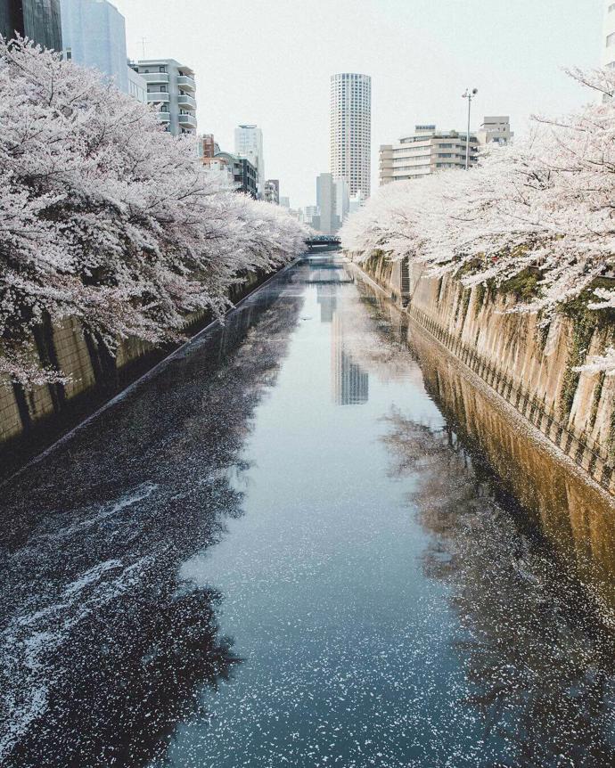 Tokyo, Japan | world | travel | japan